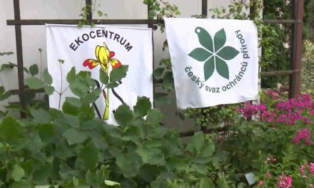Botanická zahrada připravila pro malé návštěvníky Kytičkové hrátky