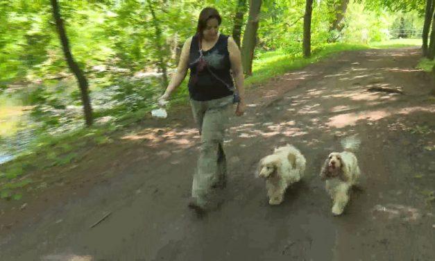 Od ledna začnou platit nová pravidla pro chov psů