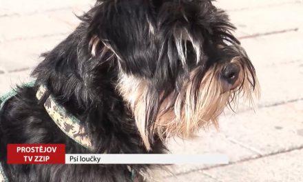 Na 16 prostějovských lokalitách se psi mohou pohybovat bez vodítka