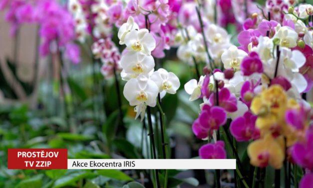 Ekocentrum IRIS opět organizuje akce