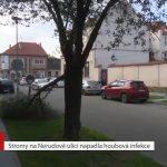 Stromy na Nerudově ulici napadla houbová choroba