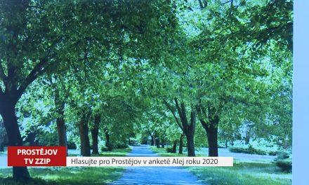 Hlasujte pro Prostějov v anketě Alej roku 2020