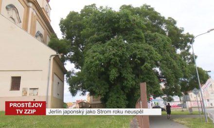 Jerlín japonský jako Strom roku neuspěl